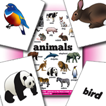IPI Flash Cards | Animals